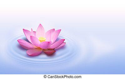 Beautiful water lotus flower