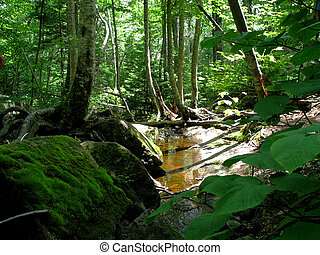 small creek running through a lush green forest in the white mountains of new hampshire
