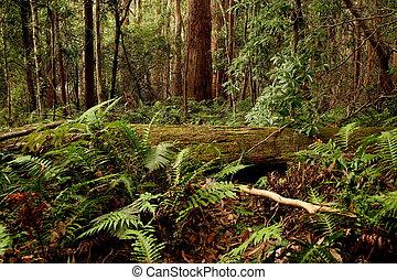 Rainforest in Queensland Australia