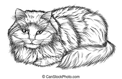 lying cat, black and white pencil drawing