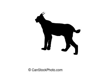 this is the black silhouette from a wild lynx