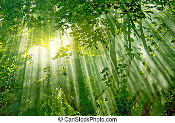magic sunlight in fresh misty forest