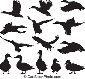 Collection of vector mallard silhouettes on white background