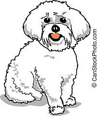 Maltese or Bichon Frise dog.