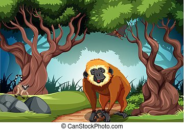 Monkey in the wild forest