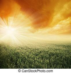 Morning sunny field