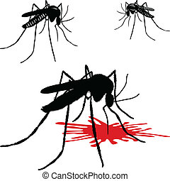 Mosquito leech