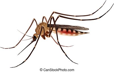 Realistic tropical fever zika virus transmitter mosquito isolated on white background vector illustration