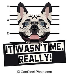 Mugshot mug shot French Bulldog