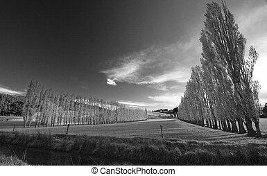 New Zealand - Black and White