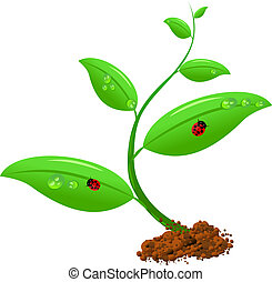 Newborn plant