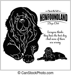 Newfoundland - vector illustration for t-shirt, logo and template badges