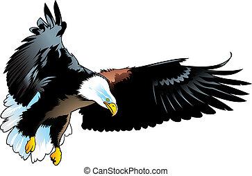 nice illustrated eagle isolated on white background