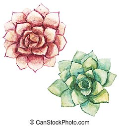 Beautiful vector image with nice watercolor succulents