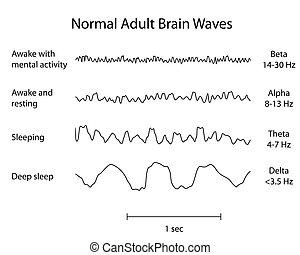 Types of human adult normal brain waves eeg