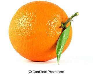 OLYMPUS DIGITAL CAMERA orange