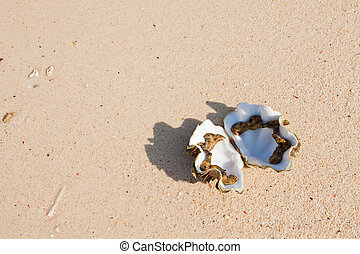 Open seashell in the sand on the background of beach