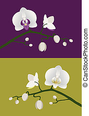 White orchids with budding stem on purple and green backgrounds.