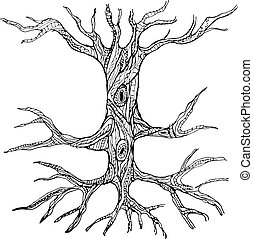 Ornate bare tree trunk with roots