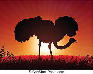 Ostrich on Sunset Background