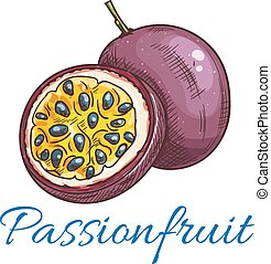Passion fruit vector color sketch icon. Isolated whole and half cut passionfruit. Maracuja fruit product emblem for juice or jam label, sticker, farm store design element