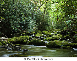 Forest river flowing gently over moss covered rocks