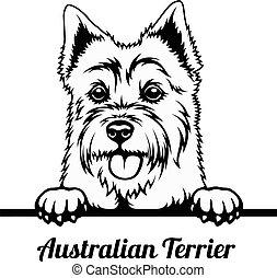 Peeking Dog - Australian Terrier breed - head isolated on white - vector stock