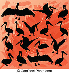 Pelican bird detailed wildlife silhouettes illustration collection background vector