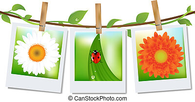 3 Photos With Image of Ladybird, Grass And Camomile, On Ancient Background, Vector Illustration