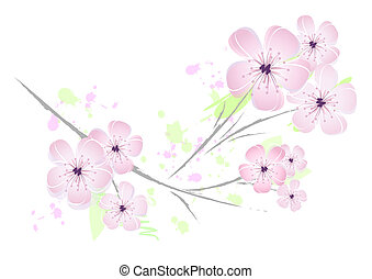 Delicate pink-colored cherry blossoms against white background.
