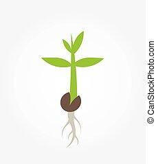 Plant seedling germination