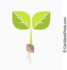 Plant seedling.