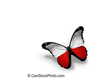 Polish flag butterfly, isolated on white background