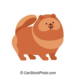 Pomeranian or Pom. Adorable funny purebred toy or lap dog of spitz breed isolated on white background. Charming lovely domestic animal or pet. Colorful vector illustration in flat cartoon style.