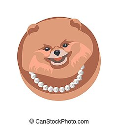 Pomeranian spitz longhaired dog in necklace on white
