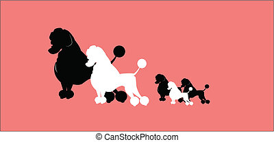family of poodles going out for walk with mom and dad
