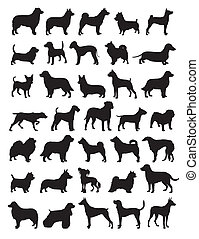 Popular dog breeds in vector illustration