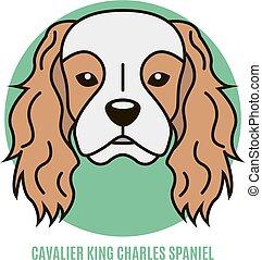 Portrait of Cavalier King Charles Spaniel