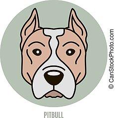 Portrait of Pitbull