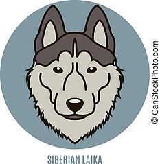 Portrait of Siberian Laika. Vector illustration in style of flat