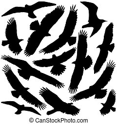 Hawk and Falcon and Eagle vector silhouettes isolated on white