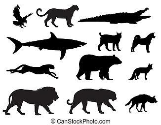 Vector illustration of various predator animal silhouettes