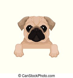 Pug puppy with cute muzzle hanging on invisible fence. Domestic animal. Small home dog. Graphic element for advertising poster or banner of pet clinic. Flat vector design isolated on white background