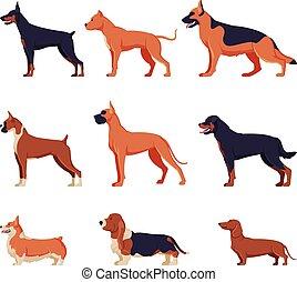 Purebred Dogs Collection, Doberman, American Bandog, German Shepherd, Boxer, Rottweiler, Welsh Corgi, Basset Hound, Dachshund Pet Animal, Side View Vector Illustration
