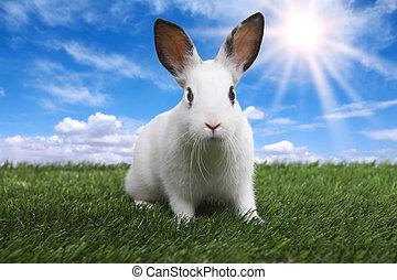 Rabbit on Serene Sunny Field Meadow in Spring