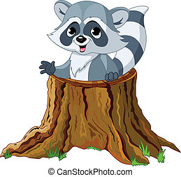 Raccoon looking out from a fallen tree stump