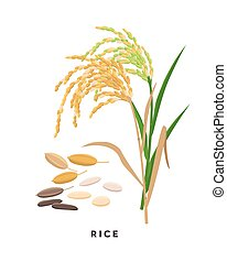 Rice cereal grass and grains - vector botanical illustration in flat design isolated on white background