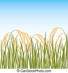 Field of rice. Yellow ears of rice and blue sky on the background. Vector illustration. Eps 10.