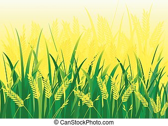 Rice field vector background