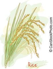 Rice (Oryza sativa). Watercolor style. Vector illustration.
